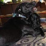 Hank & Lulu